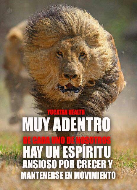 #motivacion #movimiento #leon #inspiracion #siguenos en ...