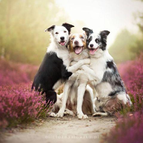 Fotógrafa polonesa faz as mais lindas imagens de cachorros que você já viu | Virgula