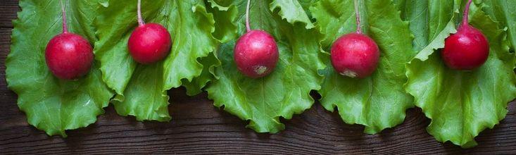 A téli hónapok egyik vitamindús és kalóriaszegény szuper zöldsége a retek, amit leggyakrabban nyersen ropogtatunk, a levelét pedig egy laza mozdulattal letörjükés a kukában landoltatjuk. De miért? Isteni finom és nagyon egészséges!