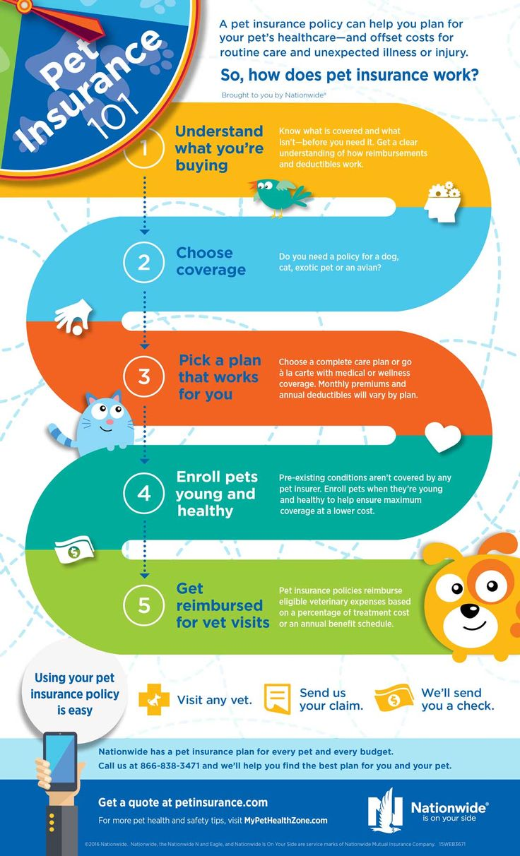 23 Best Images About Pet Infographics On Pinterest Pet