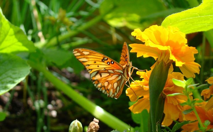 Garden Resolutions and Attracting Pollinators - Edencondensed.com
