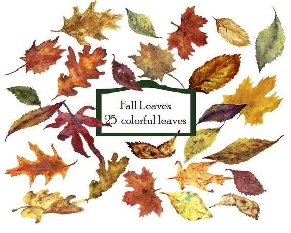 Watercolor Fall Leaves Clipart 25 Separate Elements Clip Art