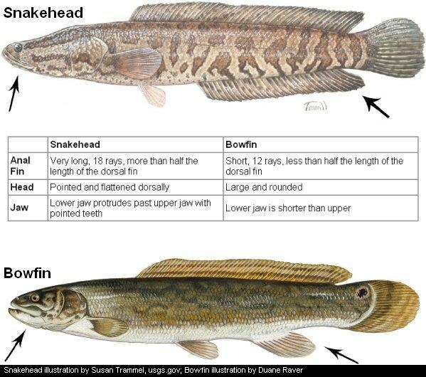 1000 images about fish species on pinterest coloring for Fish without mercury