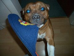 Stop Dog Chewing - Put A Stop To Your Dog's Or Puppy's Chewing Problems Now