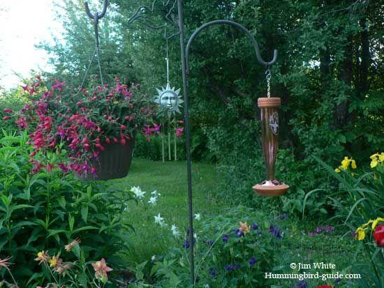 High Quality Schrodt Etched Hummingbird Feeder Review. Hummingbird GardenHummingbirds