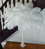 Hire your centrepieces from a reputable company. We are aware of all the scams taking place. We can provide you with all our credentials before you make a booking and payment.Ostrich feathers make the most elegant centrepieces and come in a variety of colours. We offer ostrich feather centrepieces to suite your personal needs. Contact us now for more information and make your next function something special.