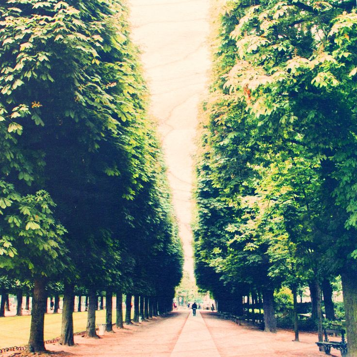 Strolling through Luxembourg | Jardin du Luxembourg, Paris, France