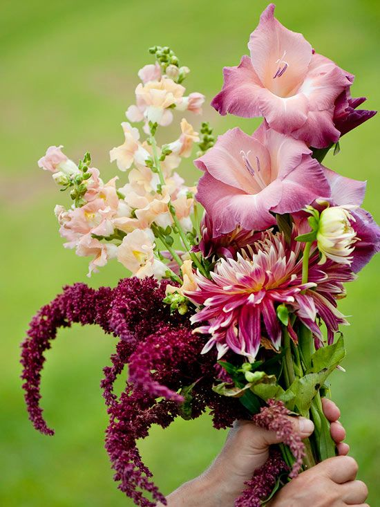 Cut flower garden - Amaranthus 'Pygmy Torch', Dahlia 'Akita', and 'Chantilly' snapdragon to combine with a mystery gladiolus