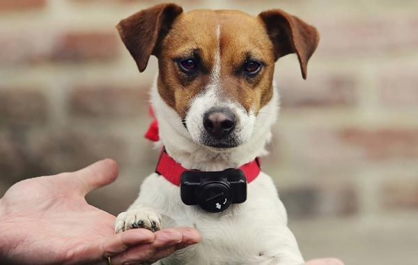 What Is A Dog Training Collar And How It Works Martingale Dog Collar Dog Shock Collar Dog Training Collar