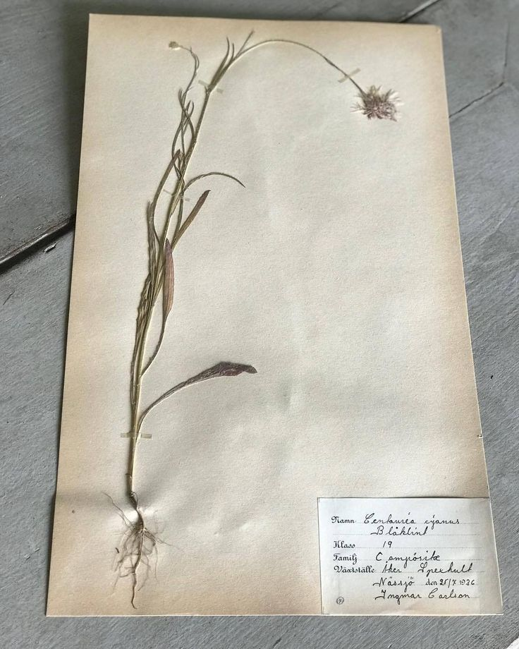 The 9 best herbarium images on Pinterest | Label, Herb box and Plants