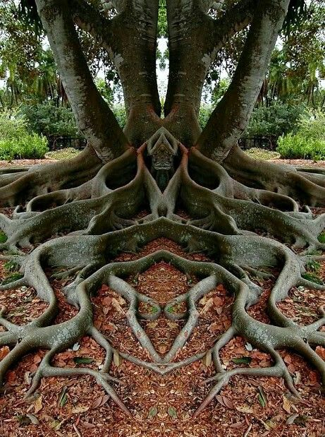 Amazing and Crazy tree root system like a pagan, elvish, fairy fantasy altar of spiritual wishing tree. Grimm nature faces.