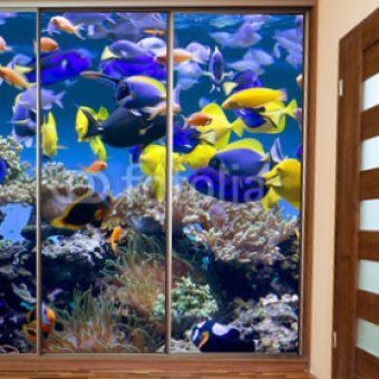 fototapeta na drzwi i meble Аквариум с рыбками