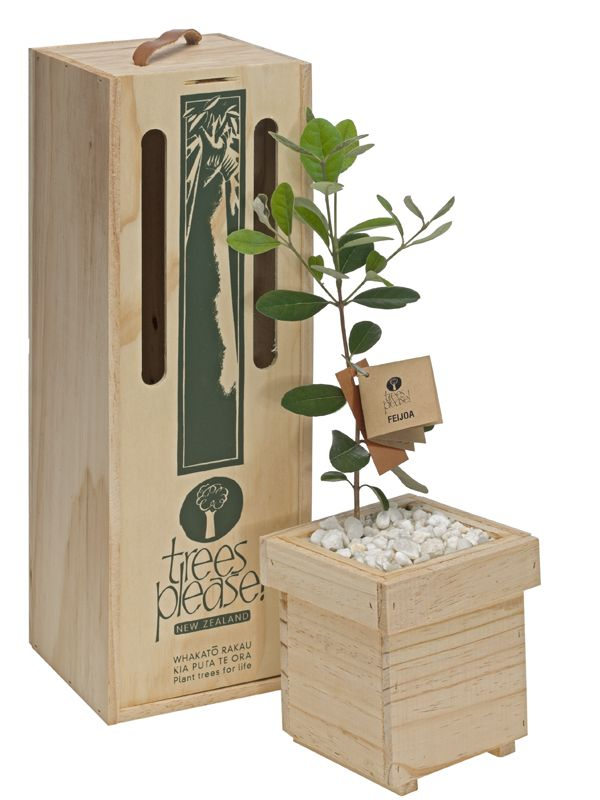 Feijoa tree boxed and delivered within NZ by NZ Trees Please!