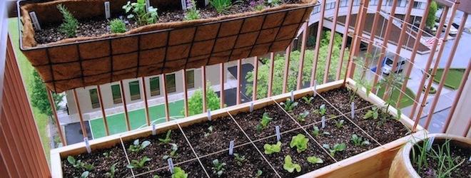 Κήπος με βότανα και λαχανικά ΠΑΝΤΟΥ - elenatz.com | elenatz.com