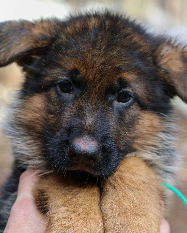 Pets For Sale In East Texas References