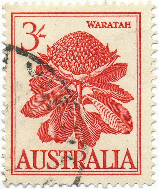 Australian,1959. Waratah (Telopea) is an endemic, Australian genus of five species of large shrubs or small trees, native to the southeastern parts of Australia (New South Wales, Victoria and Tasmania). The most well-known species in this genus is Telopea speciosissima, which has bright red flowers and is the NSW state emblem.