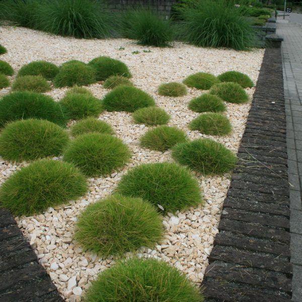 moderne voortuin tuinaanleg