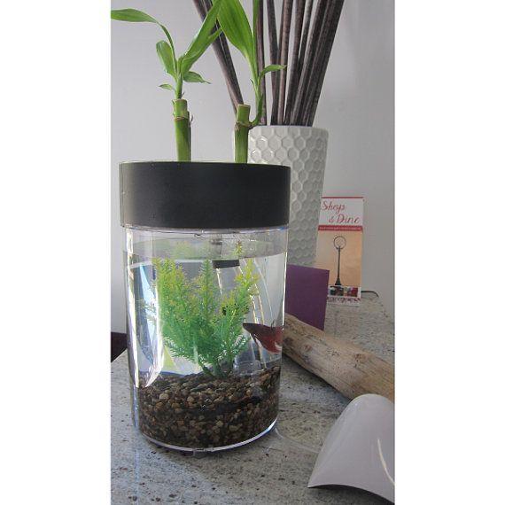 56 best images about mini aquaponics on pinterest for Aquaponics fish tank