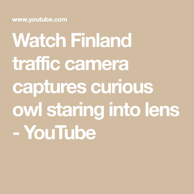 Watch Finland traffic camera captures curious owl staring into lens - YouTube