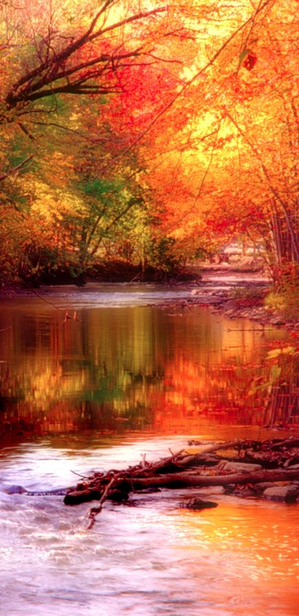 A stream in Autumn. I can't wait for autumn, either. This photograph captures the soul of this season.