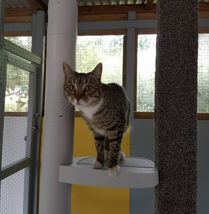 Monkee Tree in a cattery.