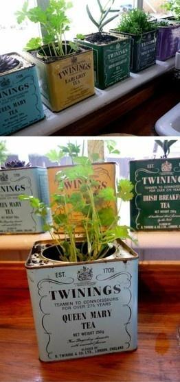 boîtes à thé recyclés en pots d'herbes aromatiques