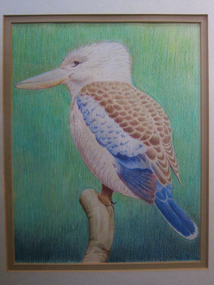 Azure Kingfisher, Colour pencil