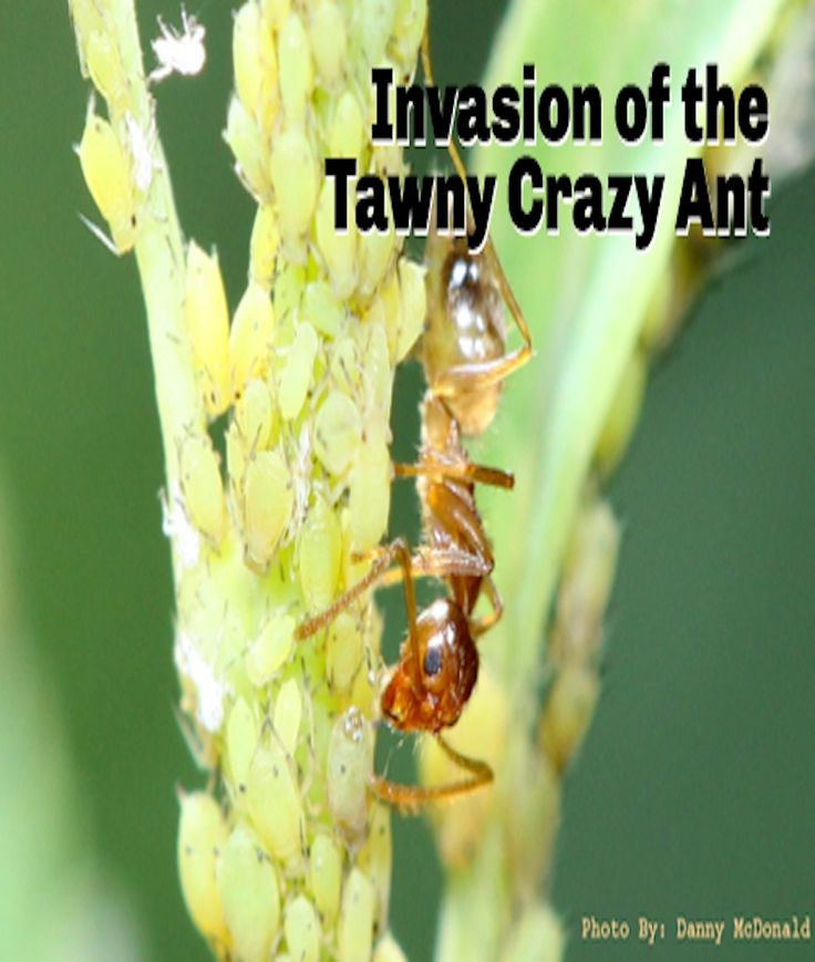 how to kill ant infestation in house