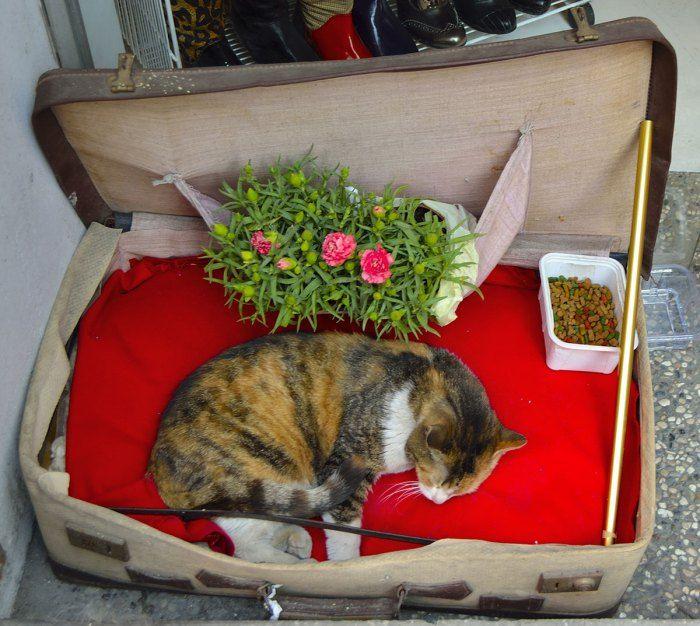 gato-callejero-estambul-turquia-4