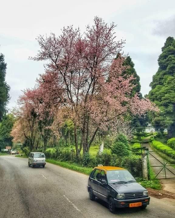 Beautiful Shlllong Meghalaya India Tourist Places Best Tourist Destinations Places To Visit