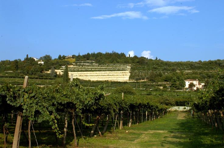 Monte Olmi
