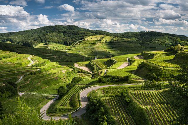 Die grünen Weinberge des Kaiserstuhls fotografeirt zur Frühlingszeit. Im Hintergrund ist die größte Erhebung des Kaiserstuhls zu sehen -- de...