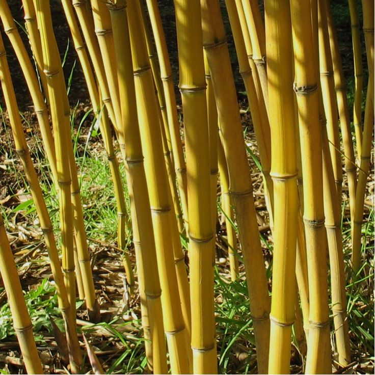 142 best bamboo design images on Pinterest Bamboo wall - bambus garten design
