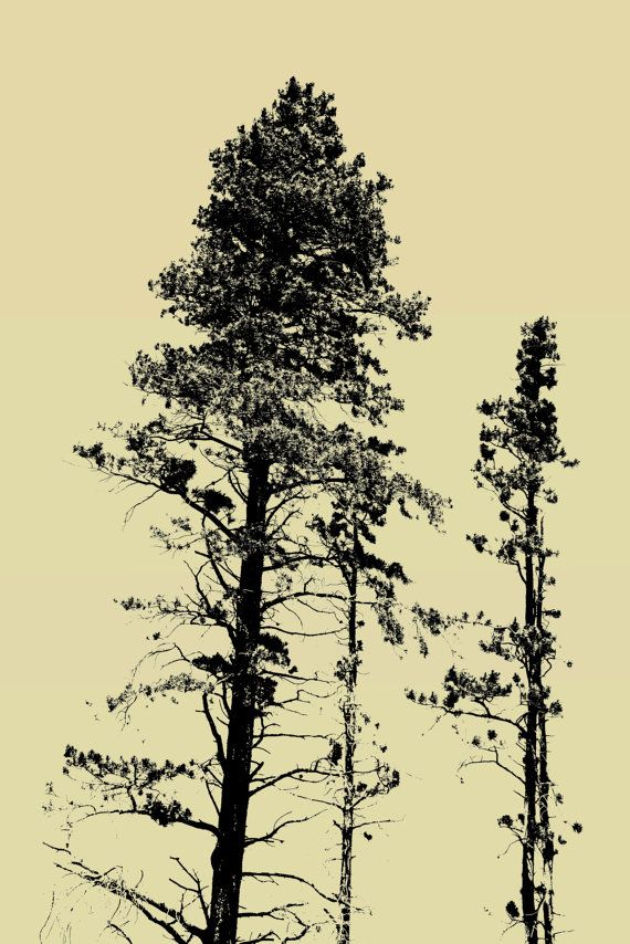 Wall Prints for sale on Etsy Retro Photography, Pine Tree Pictures Color Pop Splash Colorized Photograph, Rocky Mountain National Park Photo, Wall Poster Art  https://www.etsy.com/listing/238087887/retro-photography-pine-tree-pictures?ref=listings_manager_grid