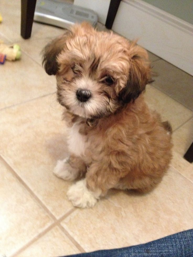 25 Best Ideas About Cutest Puppy Ever On Pinterest