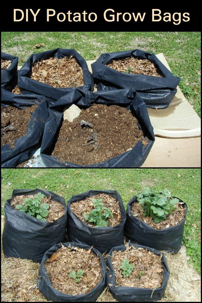 Potato grow bags or tater totes offer convenience and help