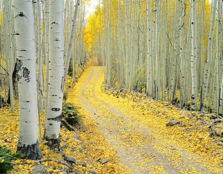 Last Dollar Road, Telluride, Colorado, USA