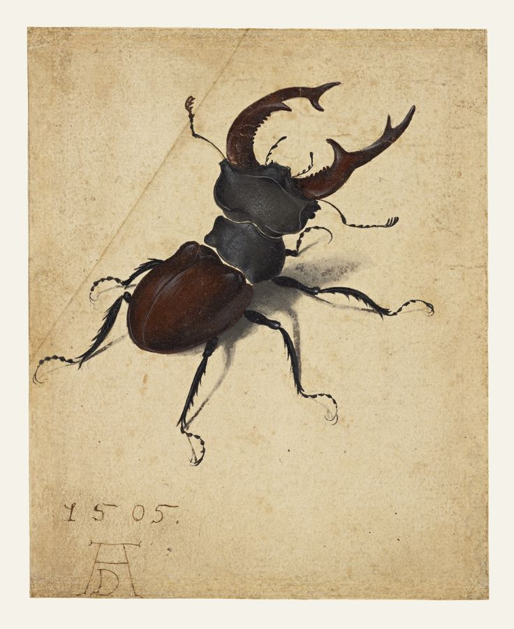 Stag Beetle; Albrecht Dürer (German, 1471 - 1528); Germany; 1505; Watercolor and gouache; upper left corner of paper added, with tip of left antenna painted in by a later hand; 14.1 × 11.4 cm (5 9/16 × 4 1/2 in.); 83.GC.214; J. Paul Getty Museum, Los Angeles, California