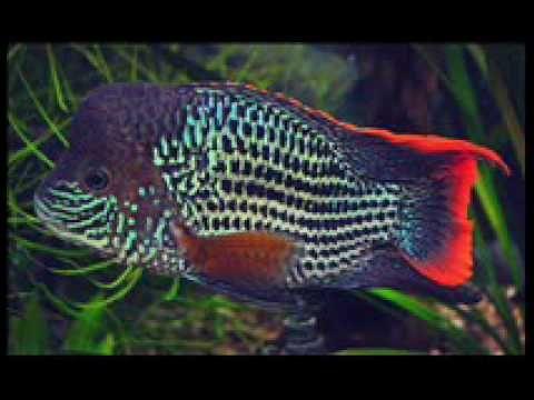 Aquarium Background music Mozart Requiem