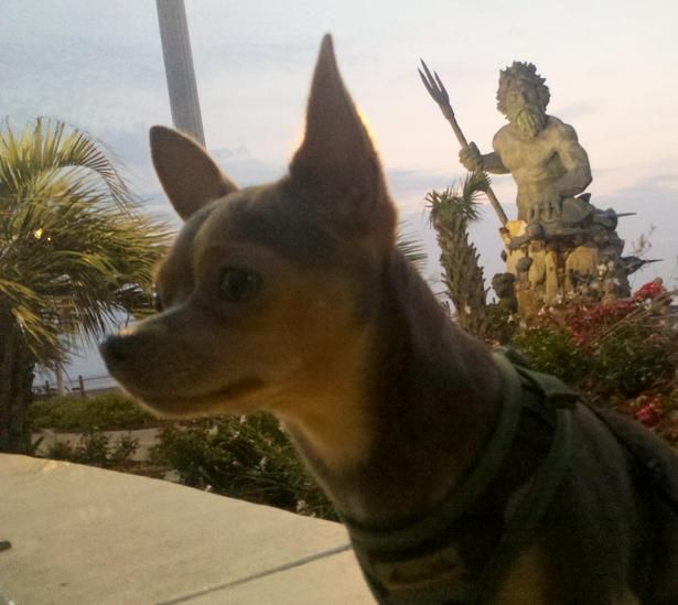 Play in the sand with Fido at the highly reviewed Sheraton Virginia Beach Oceanfront Hotel!