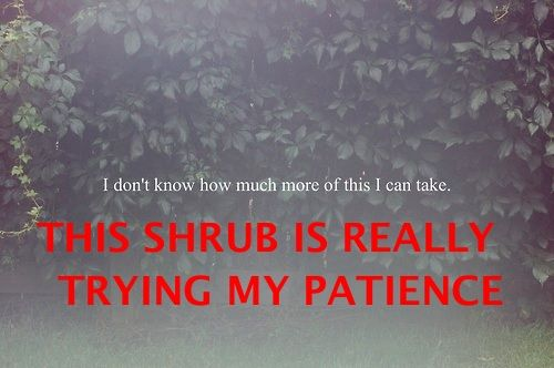 Shrubs...hard to create the green lesson on BUSHES AND SHRUBS!!  Everglades gals will know what I'm talking about :)