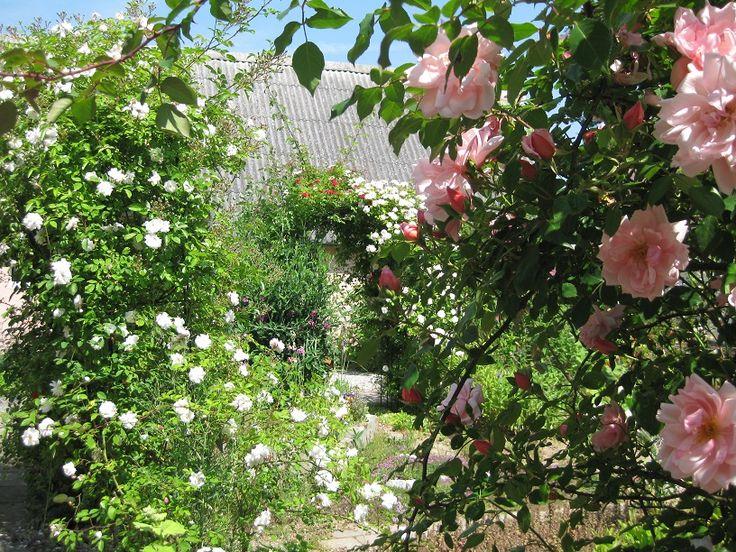 Venusgarden flower and love paradise in Sweden