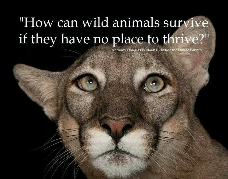 Save Earths creatures!