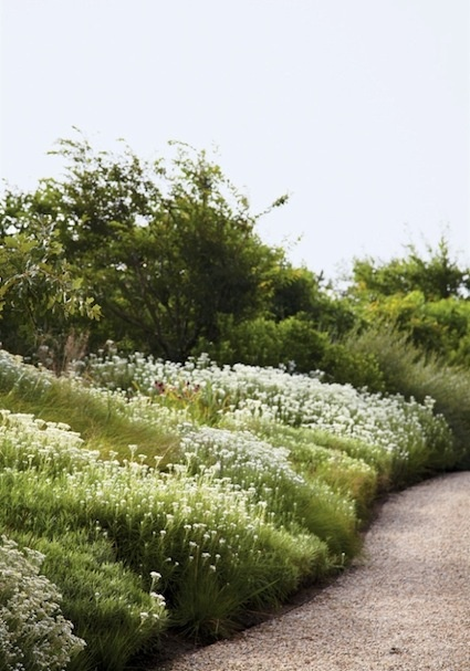 piet oudolf garden- so like a painting- the swaths of white daisies are wonderful