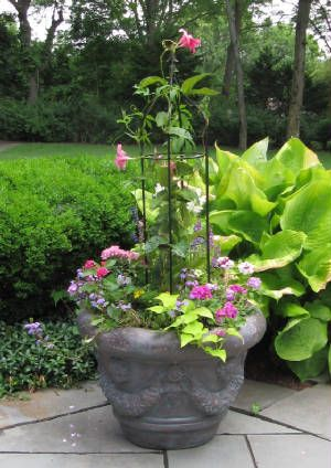 Love the idea of putting a small tuteur in the container for a climber like mandevilla to clamber upon.