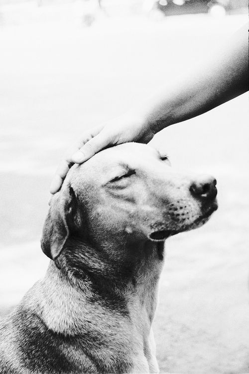 unconditional love. That's all they live for, small pat on the head from their human & they are so happy!!