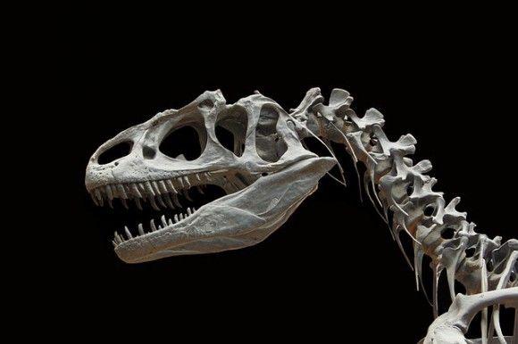 Los Restos De Un Supuesto Dinosaurio Intrigan A Jaspur Animales De La Prehistoria Fósiles De Dinosaurios Animales Prehistóricos