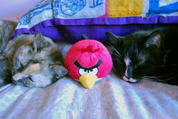 #AngryBirds and Sleepy #Cats! so #cute