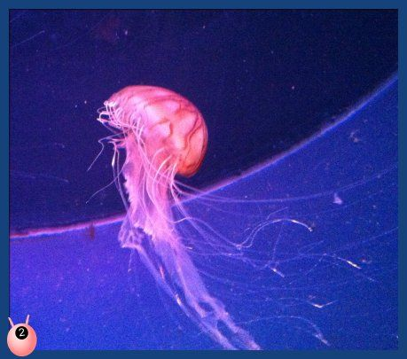 Review of the National Sea Life Centre Birmingham with Poppy Cat