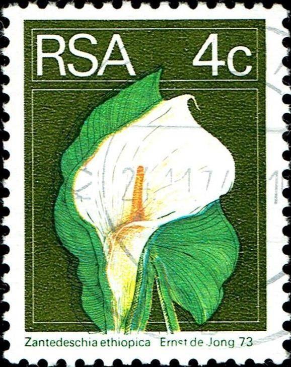 Stamp Calla Lily Zantedeschia Ethiopica South Africa Definitives Flora And Fauna Mi Za 450 Sn Za 411 With Images Zantedeschia Calla Lily Perennial Flowering Plants